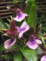 Мой личный опыт в выращивании орхидей