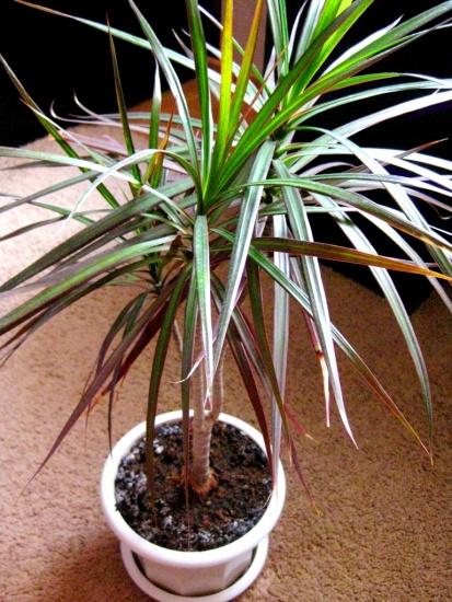 Энергетика комнатных растений уход