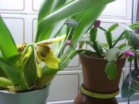 Выращивание орхидей!