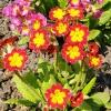 Первые цветы весной: примула, ландыши, нарциссы