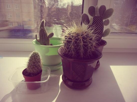 С кактусами нужно разговаривать