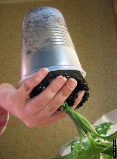 Как определить, что растению тесен горшок