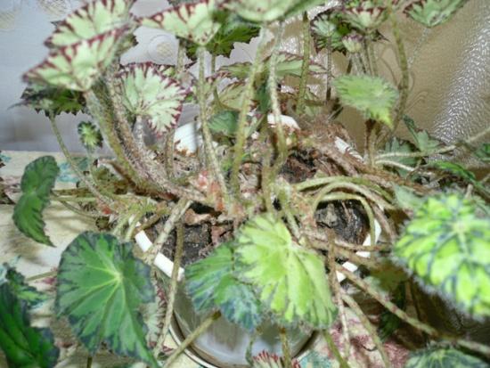 Пусть растения растут ровными