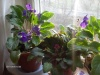 растения подружились
