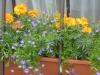 Цветы на балконе и на подоконнике