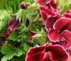 Вязаная одежка на цветочный вазон