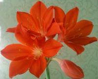 Аспарагус - осенний цветок