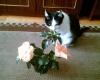 Гибискусы и кот.