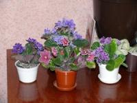 Цветет и радует