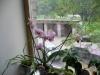 Мои любимые орхидеи
