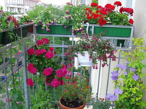 Цветник на балконе: и польза и радость