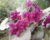 Выбор цветочного вазона