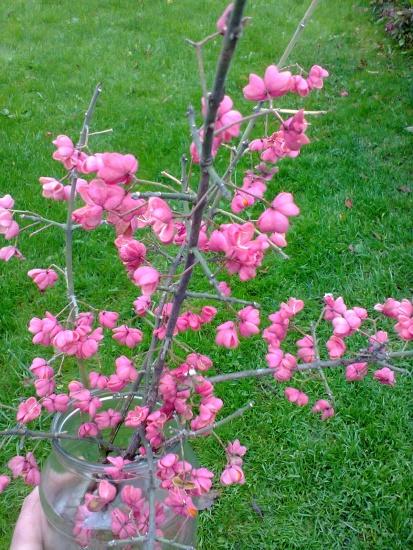 Красивое непонятное растение