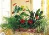 Цветочные композиции из комнатных растений – составляем правильно