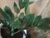 Мое  «Денежное  дерево».