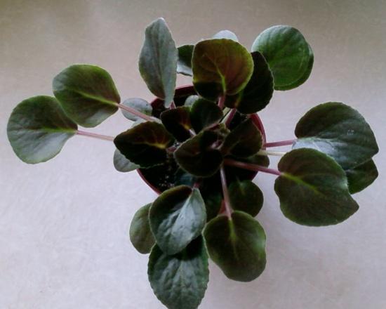 Комнатные растения и цветы пересадка перевалка фото