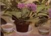 Советы по поливу комнатных растений.