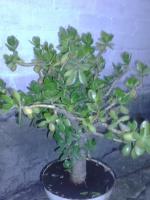 Мох для комнатных растений.
