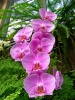 Некоторые особенности содержания и полива домашних орхидей.