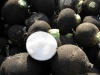 Редька маргеланская и редька черная: выращивание и полезность