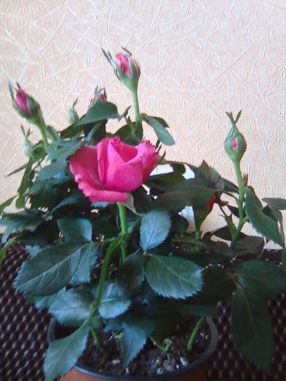 Розы по техника канзаши мастер класс