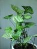 Самое неприхотливое растение
