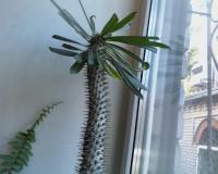 Появление в доме кактуса